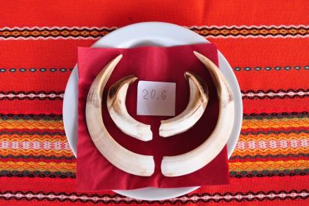 chasse en Bulgarie février 2020 092